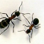 Children Safety From Common Bugs And Insects